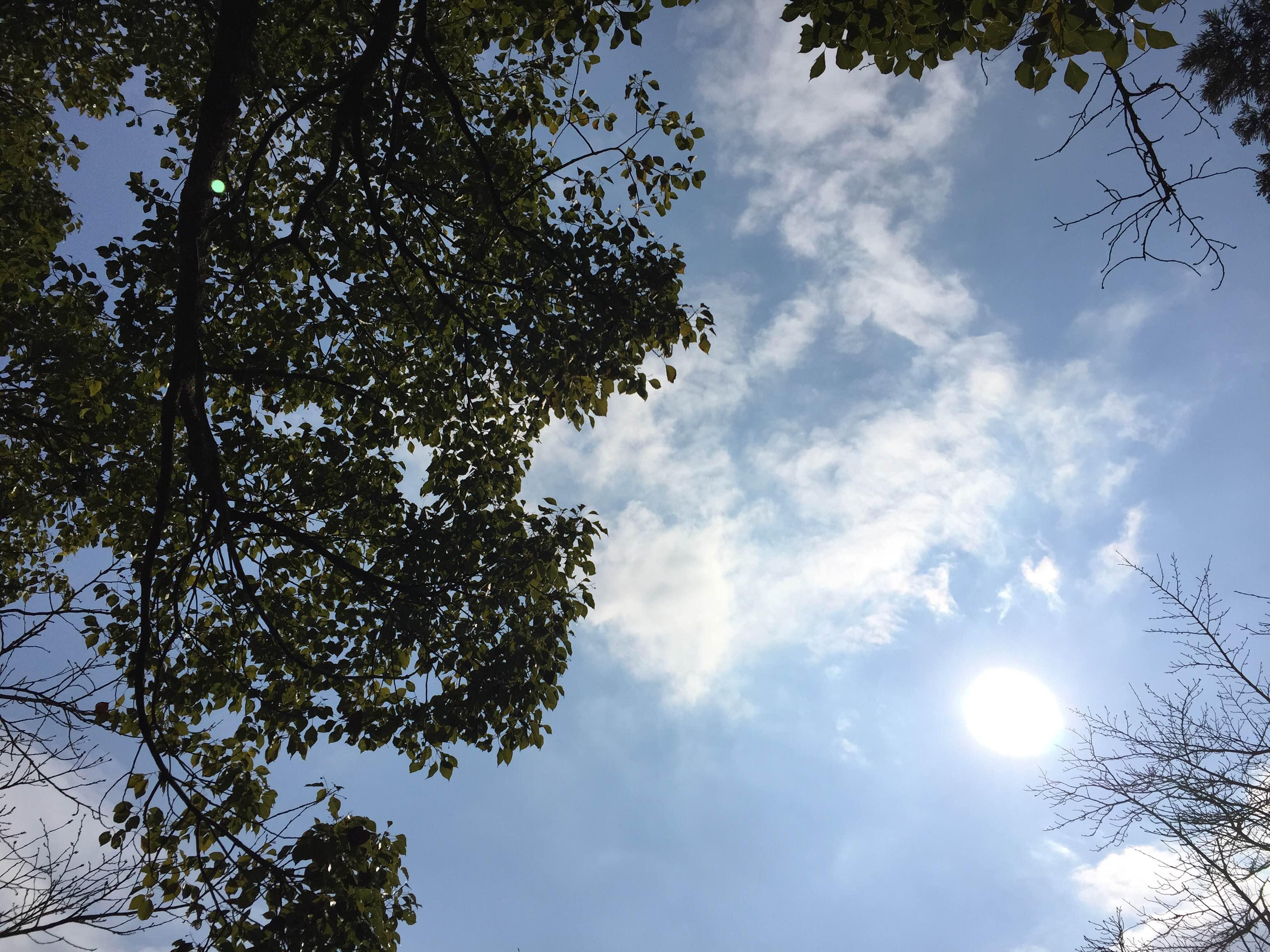 甘木公園で遊ぶ・歩く、何する?